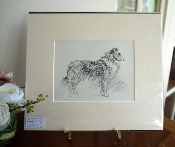 Rough haired Collie - Col B2 -1930's print by K F Barker